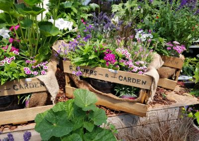 bepflanzte-kiste