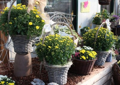 bepflanzte-koerbe